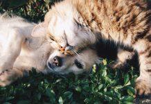 ¿Estás pensando en tener una mascota? Antes de dar el paso hazte estas preguntas y contesta con sinceridad.
