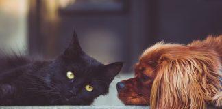 Ha llegado a tu hogar una nueva mascota. Vuestra vida va a cambiar… y la suya más.